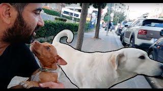 Bu Yol Arkadaşıma Bayılacaksınız 2 Km Yürüdü Evime Kadar Geldi Bu Köpeğin Adını Moza Koyduk