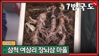 [7번국도] 삼척 여삼리 장뇌삼 마을 / MBC 강원영…