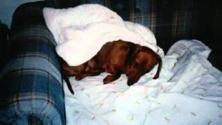 """Farewell My Gretchen """"dachshund"""".wmv"""