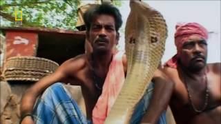 Самые Опасные Животные Индия !!! Животные с National Geographic