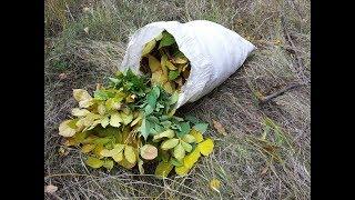 Как сэкономить сено. Экономия сена и бесплатный корм для животных.