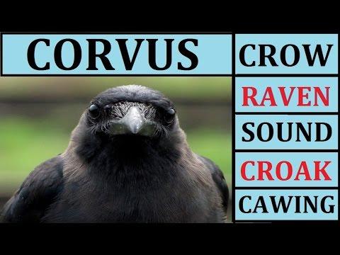 Bird Sounds Digitally Recorded