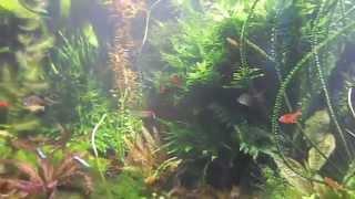 Мой Голландский аквариум.