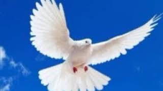 Mixed worship -  JESUS IS LORD WORSHIP TEAM!!!