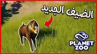 لعبة حديقة الحيوان #6 | قرد الماندريلا ومشاكل الكومودو | Planet Zoo 2020 🐘👍 screenshot 1