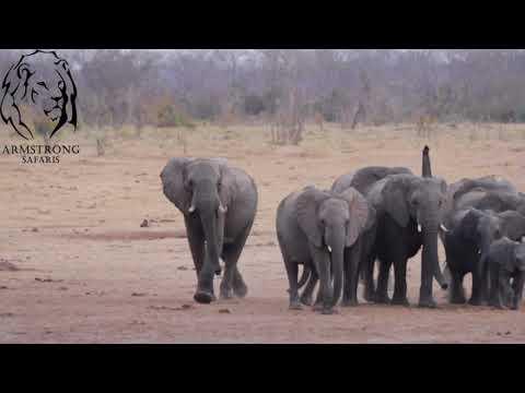 The Elephants of Hwange