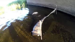 Siata w rzece, kłusownicy i ich metody - Short znad wody  - Wędkarstwo RR