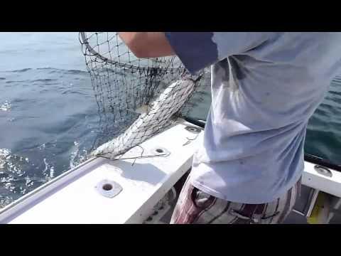 Deep sea fishing for striped bass youtube for Deep sea fishing seattle