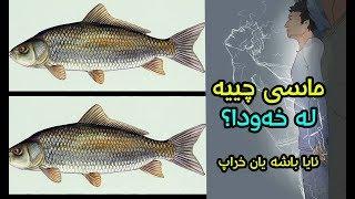 ماسی چییە لە خەودا؟ ئایا باشە یان خراپ