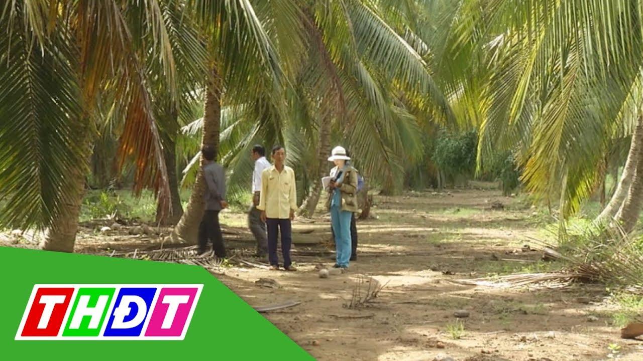 Vườn dừa hữu cơ – Hướng đi mới cho người trồng dừa | THDT