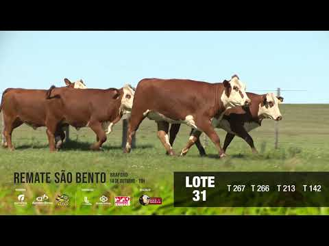 LOTE 31