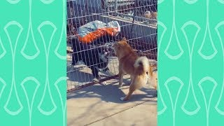What is the Brave dog ? watch this video and you will know | Funniest Dog videos