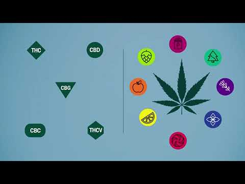 The science behind indica, sativa, and hybrid classifications