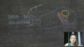 Строение мембраны клетки