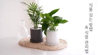 공기 정화 식물 키우기…