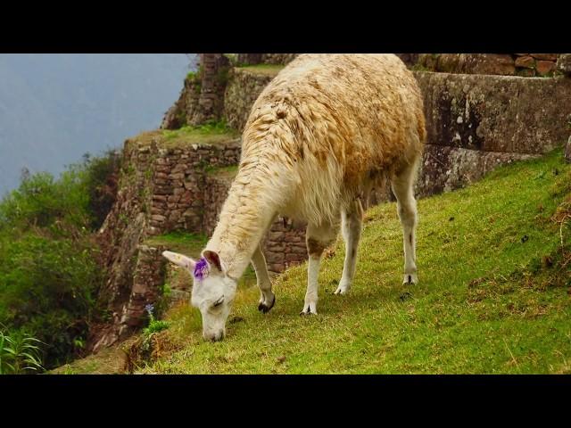 temps du voyage au Machu Picchu