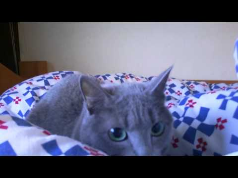 Big earthquake in Japan and Russian Blue cat