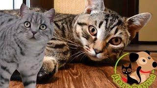 Как отучить кошку от корма? Что за новый дизайн канала?
