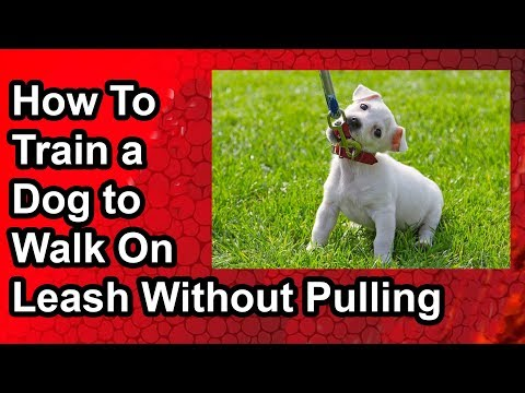 how-to-train-a-dog-to-walk-on-a-leash-without-pulling