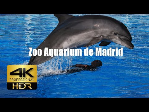 4k Zoo Aquarium de Madrid