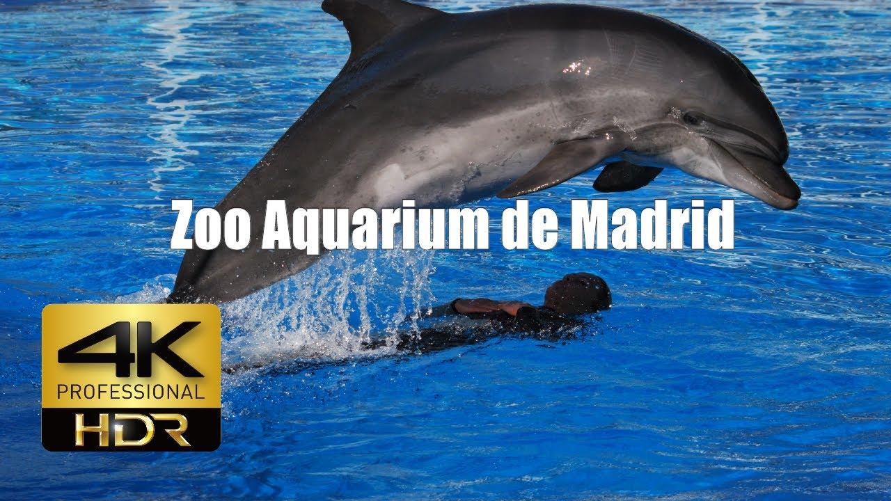 4k Zoo Aquarium de Madrid #1