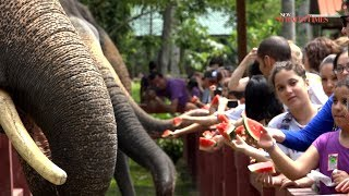 Elephant Journal: Kuala Gandah Elephant Sanctuary