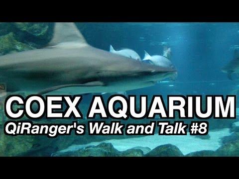 The COEX Aquarium - QiRanger's Walk and Talk #8 [GoPro Korea]
