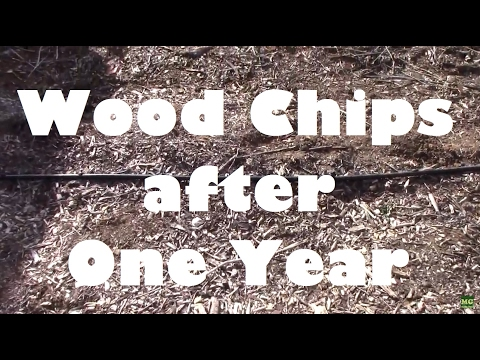 Wood Chip Gardening After One Year. The Good and the Bad.