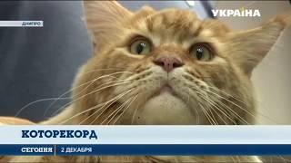 В Днипре выбрали самого крупного кота Украины