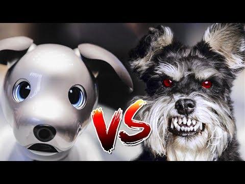 Sony Aibo V.S. Angry Puppies