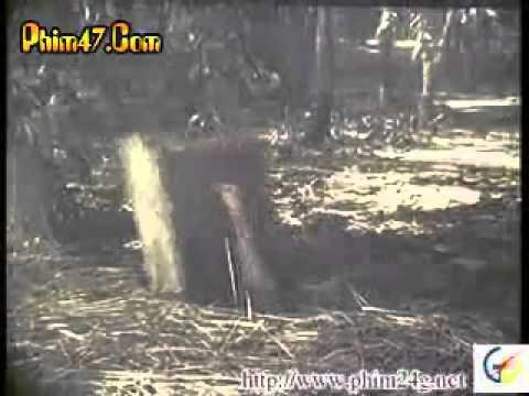 Xem Phim Biệt Động Sài Gòn Tập 3 - (phan 1)