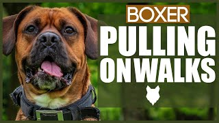 How To STOP Your BOXER PULLING ON WALKS