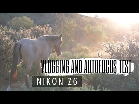 Nikon Z6 Vlog And Video Autofocus Test