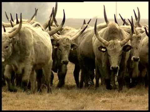 Magyarország nemzeti parkjai - Dunán innen /teljes film/