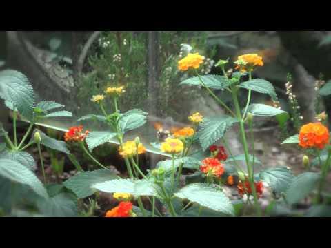 Colibri butterfly in Garden HD