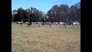 Semifinal Prueba de Riendas San Cayetano Octubre 2016