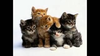 Какие бывают коты и котята.