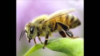 BEES.MP3 (2012 Hardcore bee-mix)