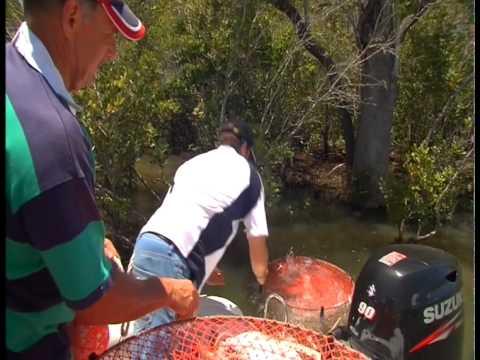 Seafarer Vixen - Pine River Mudcrabs