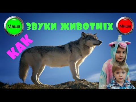Маша и Миша изучают звуки животных. Часть 1