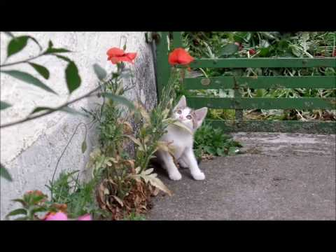 JR (John Rambo) loves the flower! Flower Kitten