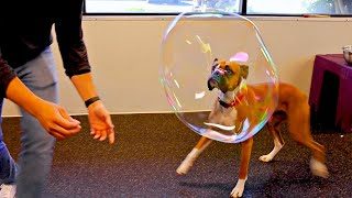 Making Giant Bubbles for Dogs!