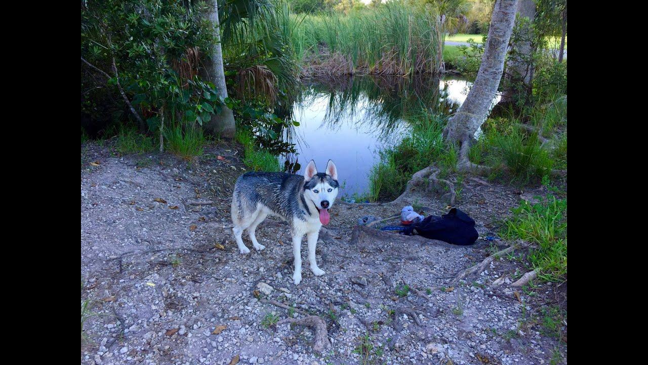 Husky Enjoys the Lake!