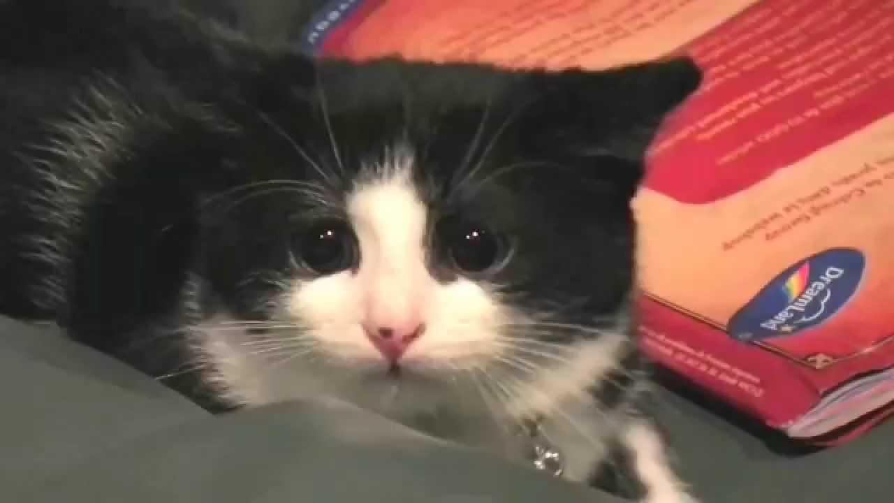 Image Chat Mignon chitrouille, le chaton mignon, fait ses gros yeux - cute kitten's