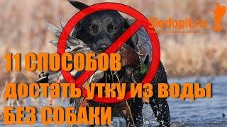 11 способов как достать утку из воды без собаки