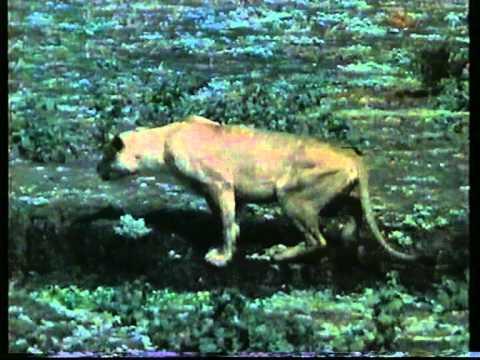 youtube filmek - Otthon a vadonban - A home in the wilde - Herz für wilde Tiere