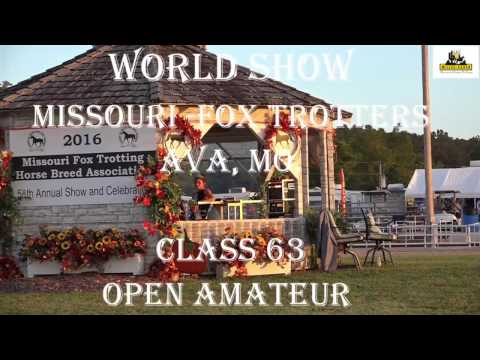 Missouri Fox Trotter World Championship AVA 2016 3years  open Am  Mares