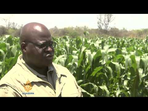 Mistrust plagues Zimbabwe farming
