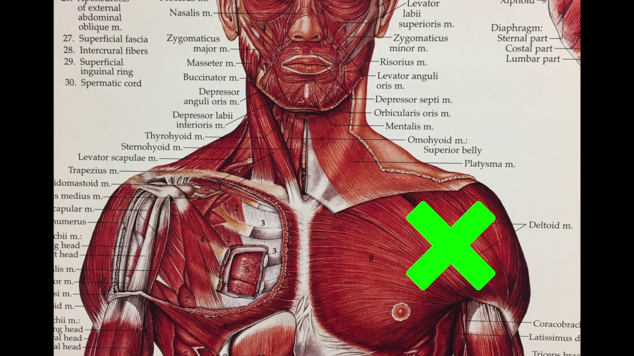 FIX YOUR SHOULDER PAIN ( Active release for the front of your ...