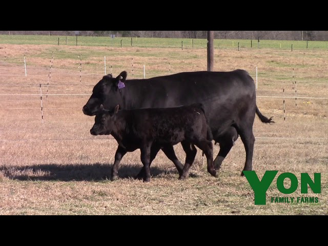 Yon Family Farms Lot 170